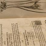 Souls of Ancient Books -9096