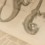 Souls of Ancient Books -9084